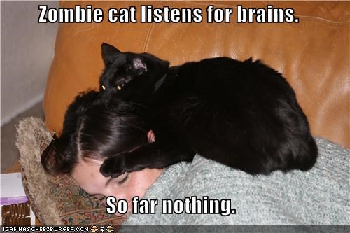 Zombie cat listens for brains.  So far nothing.