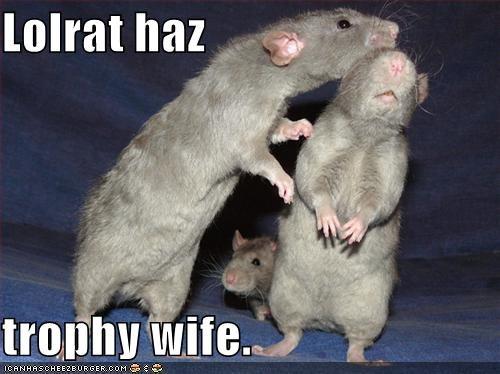 Lolrat haz  trophy wife.