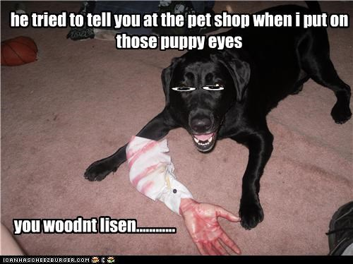 he tried to tell you at the pet shop when i put on those puppy eyes