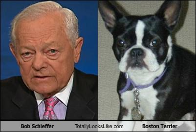 Bob Schieffer Totally Looks Like Boston Terrier
