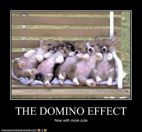 corgis,cute,Dominoes,more,puppies,the domino effect
