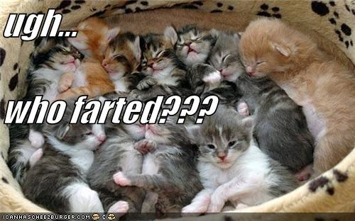 ugh... who farted???