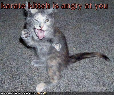 karate kitteh is angry at you