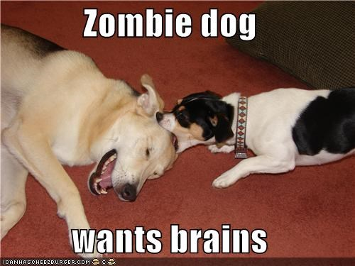 Zombie dog  wants brains