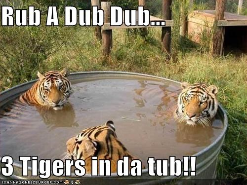 Rub A Dub Dub...  3 Tigers in da tub!!
