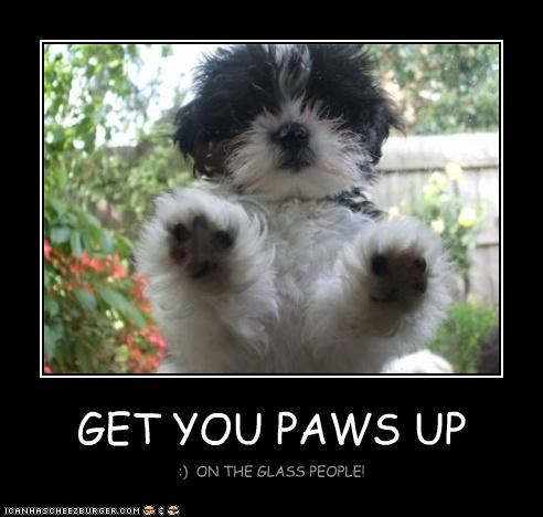 GET YOU PAWS UP
