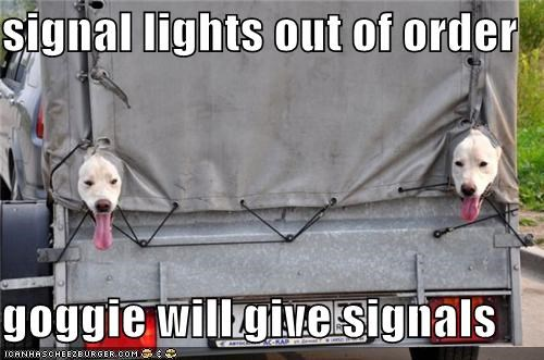 signal lights out of order  goggie will give signals
