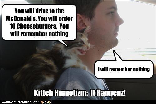 Kitteh Hipnotizm