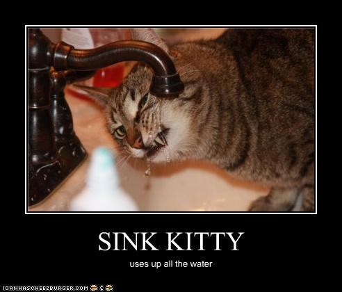 SINK KITTY