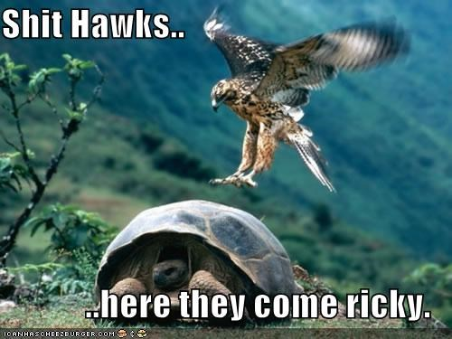 Shit Hawks..  ..here they come ricky.