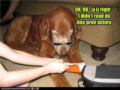 book,correct,fine print,mistake,mixed breed,reading,reading glasses