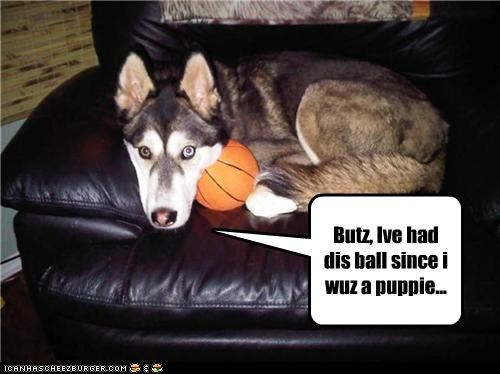 aging,ball,husky,protesting,puppie,sentimental value,themed goggie week