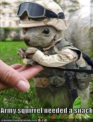 Army squirrel needed a snack.