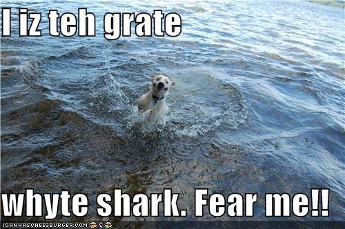 I iz teh grate  whyte shark. Fear me!!