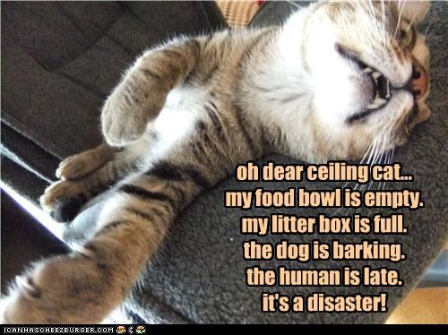 oh dear ceiling cat... my food bowl is empty. my litter box is full. the dog is barking. the human is late. it's a disaster!