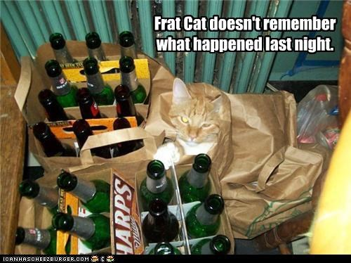 Frat Cat doesn't remember what happened last night.