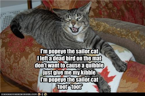 I'm popeye the sailor cat I left a dead bird on the mat don't want to cause a quibble just give me my kibble  I'm popeye the sailor cat *toot* *toot*