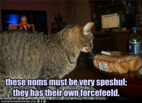 these noms must be very speshul; they has their own forcefeeld.