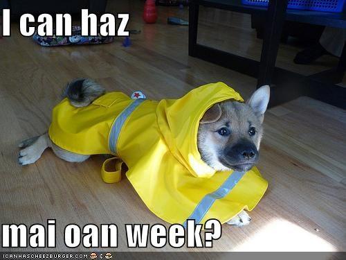I can haz   mai oan week?