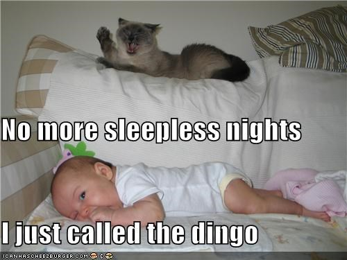 No more sleepless nights I just called the dingo