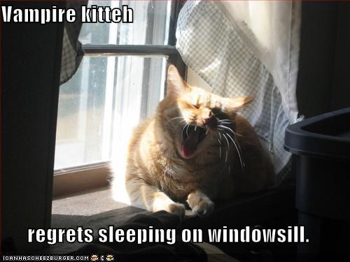Vampire kitteh  regrets sleeping on windowsill.