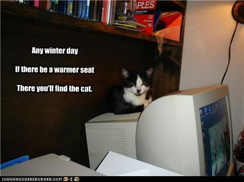 Any winter day  If there be a warmer seat  There you'll find the cat.