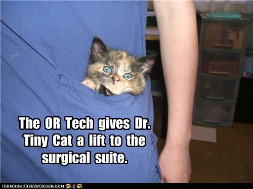 The  OR  Tech  gives  Dr. Tiny  Cat  a  lift  to  the surgical  suite.