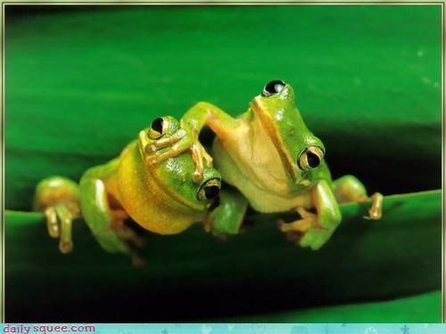 frog,squee spree,tree frog