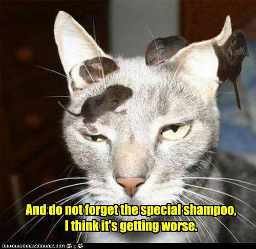 And do not forget the special shampoo,  I think it's getting worse.