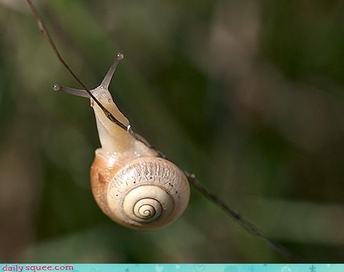 Hang In There, Snaily!