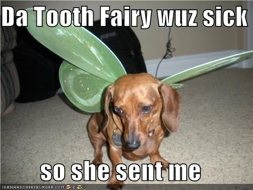 dachshund,fairy,replacement,sick day,tooth fairy,wings