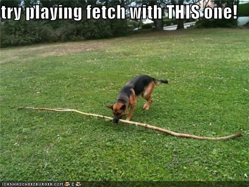 try playing fetch with THIS one!