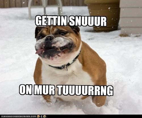 critters,dogs,it is winter now,snow,tongue,tuuurng i mean