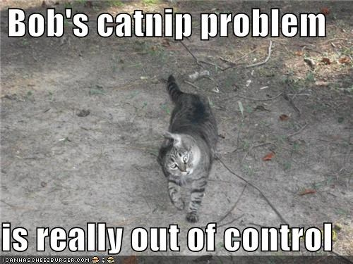 Bob's catnip problem  is really out of control