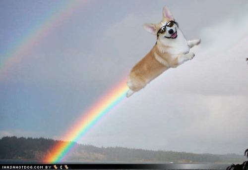awesome,corgi,double rainbow,flying,photoshopped,rainbow,sunglasses,what it means