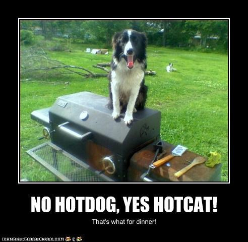 NO HOTDOG, YES HOTCAT!