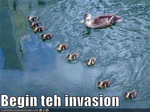 Begin teh invasion