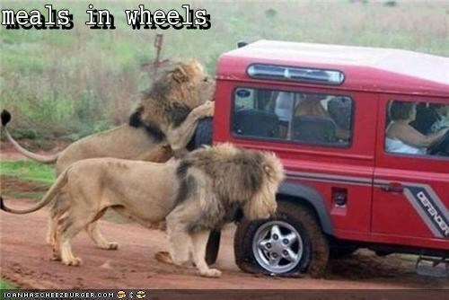 meals in wheels