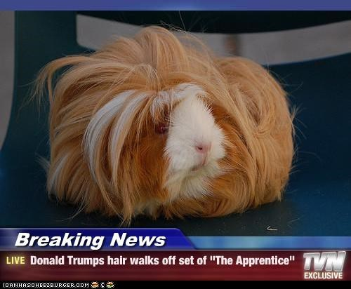 "Breaking News - Donald Trumps hair walks off set of ""The Apprentice"""