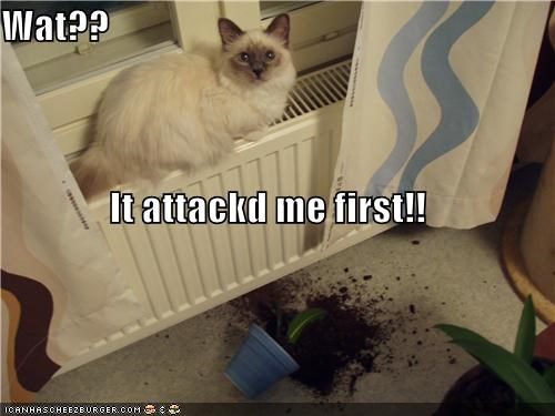 Wat?? It attackd me first!!