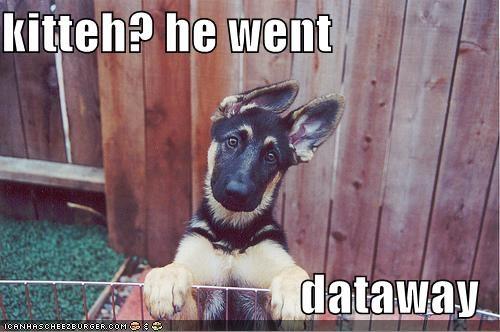 ears,german shepherd,he went that way,kitteh,pointing,puppy,themed goggie week