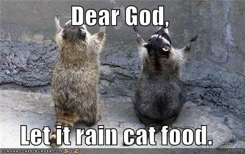 Dear God, Let it rain cat food.