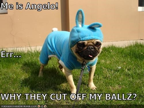 Me is Angelo! Err... WHY THEY CUT OFF MY BALLZ?