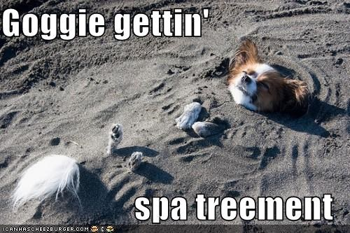 Goggie gettin'  spa treement