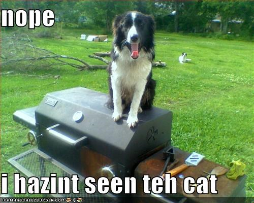 nope  i hazint seen teh cat