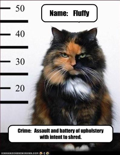 arrested,caption,captioned,cat,crime,Fluffy,intention,mugshot,shred,upholstery