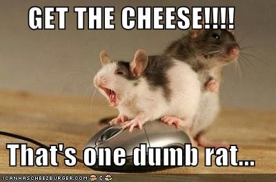 GET THE CHEESE!!!!  That's one dumb rat...