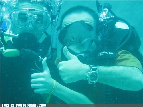 Animal Bomb,animals,face,fish,mutant,photobomb,scuba diving,underwater