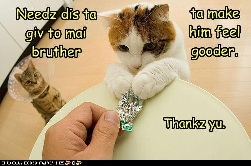 brother,candy wrapper,caption,captioned,cat,cone of shame,feel better,gift,helping,treat