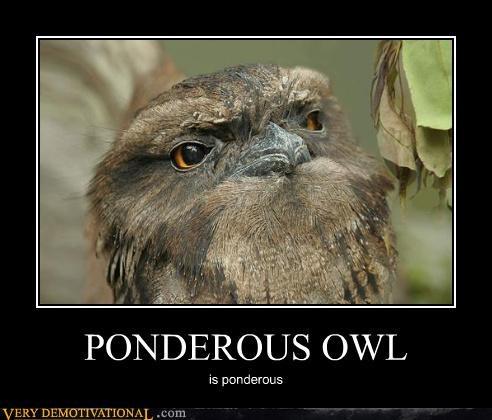 animals,anthropomorphizing,hilarious,owls,pondering,the mindscape,thought